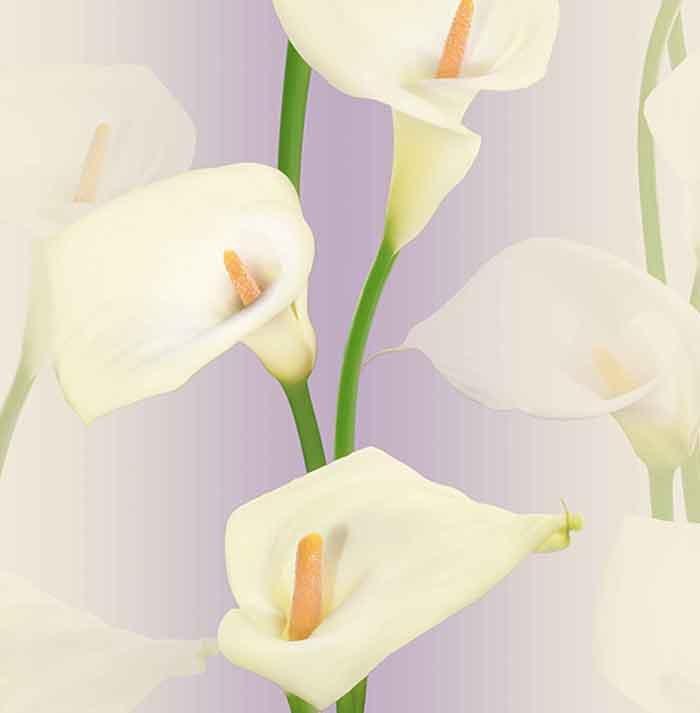 Giấy dán tường hoa ly GHQ36013