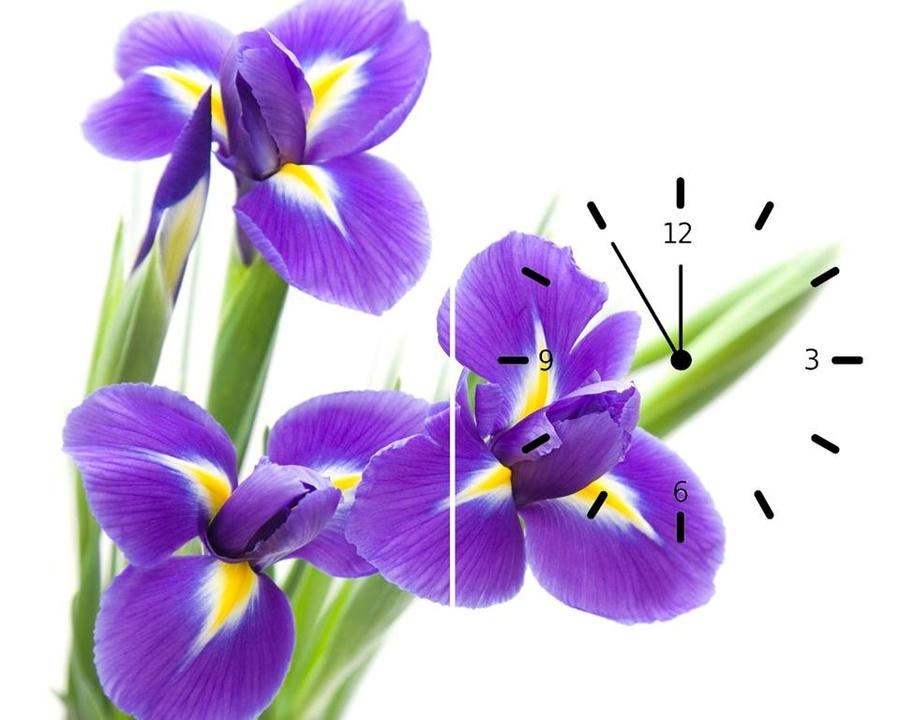 Tranh đồng hồ hoa tím 2 tấm 30x60x2