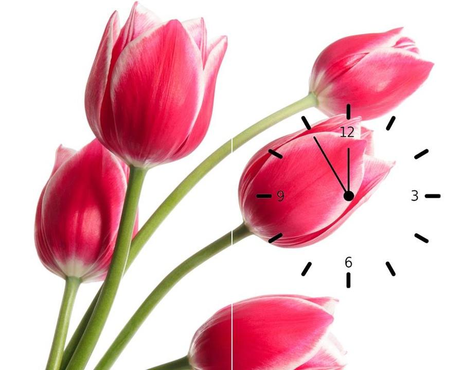 Tranh đồng hồ hoa tulip hồng 2 tấm 30x60x2