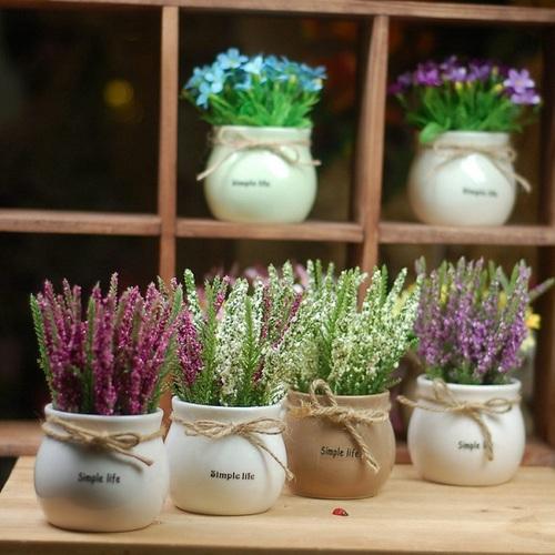 Chậu nhỏ hoa lavender