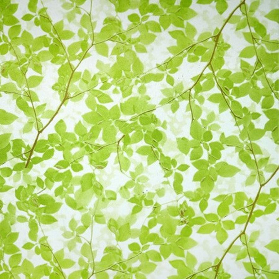 Decal cuộn kính mờ cành cây xanh khổ 0.9m