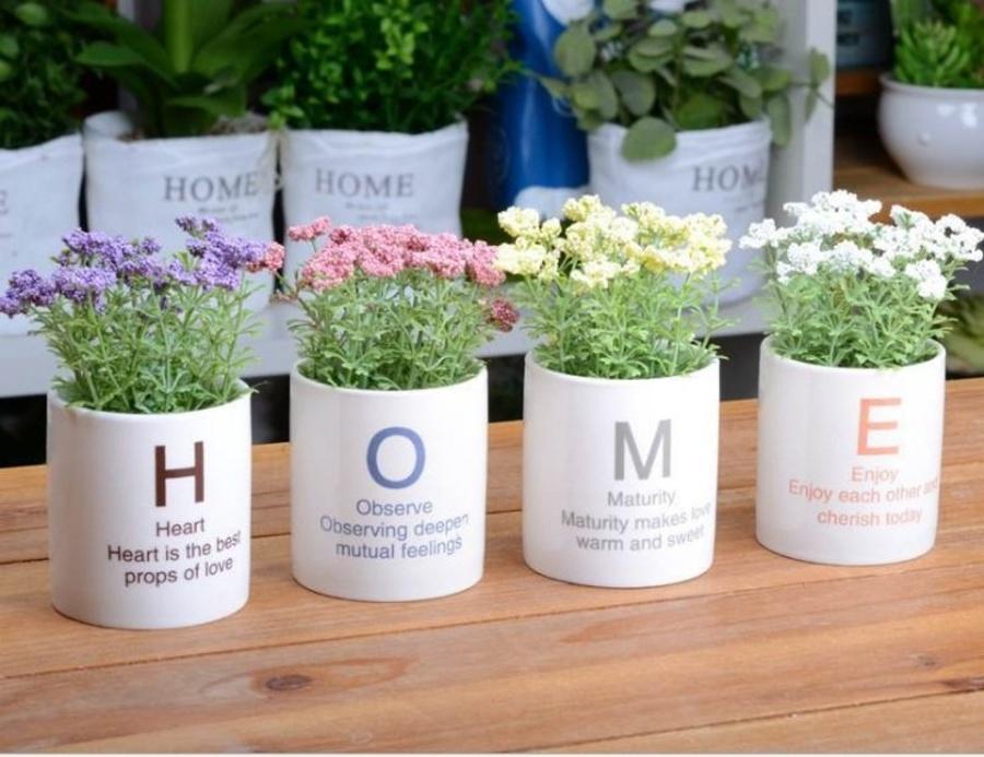 Chậu hoa cỏ home để bàn