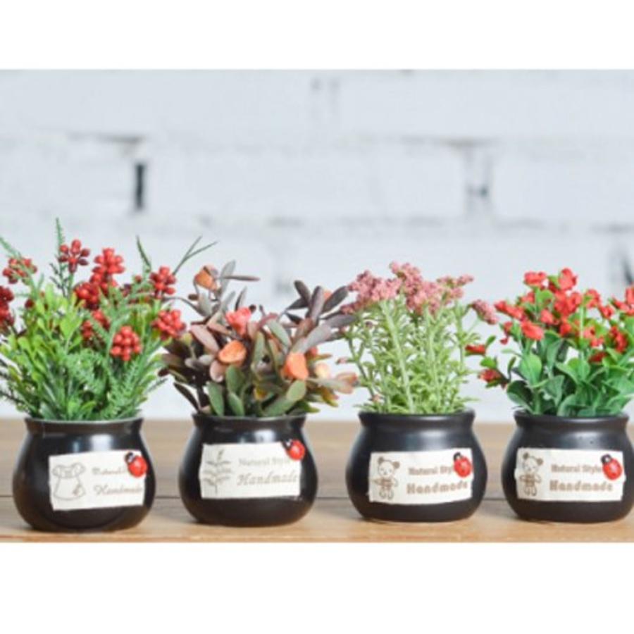 Chậu hoa lá đỏ để bàn