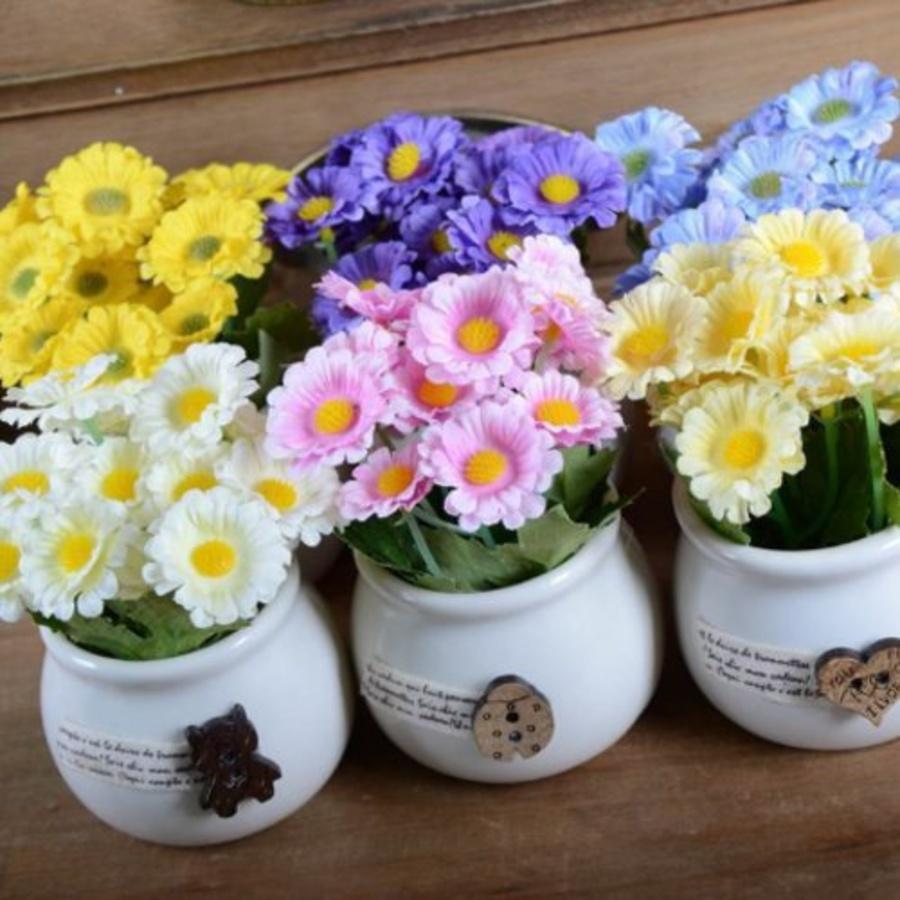 Chậu hoa cúc nhỏ để bàn