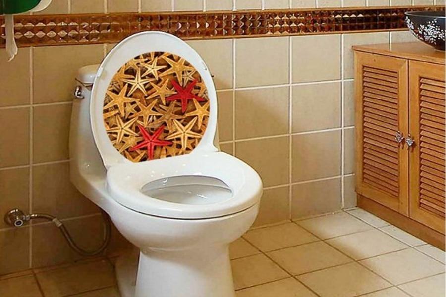 Dán toilet sao biển
