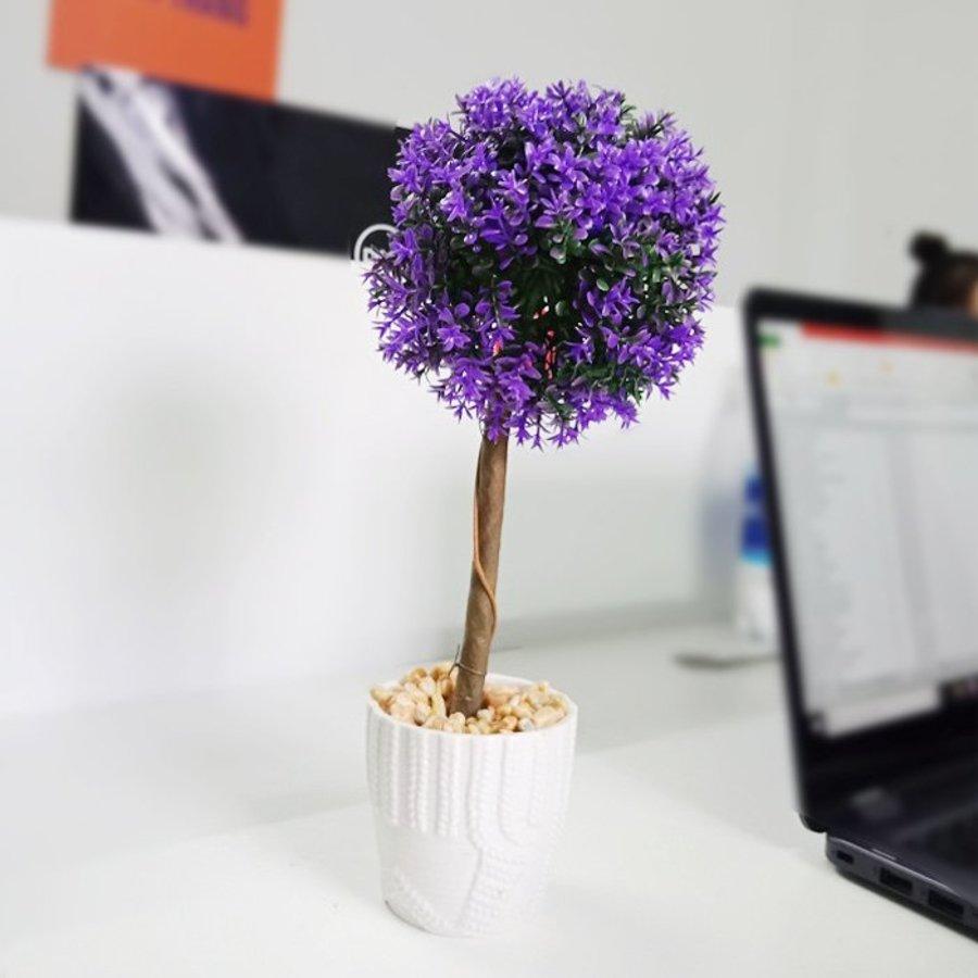 Chậu cây hoa tím
